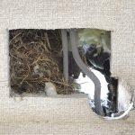 エアコン外壁の穴に、雀の巣が!【室外機、ダクト、パッキン】