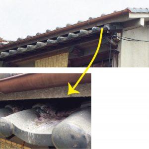 屋根と庇の鳥の巣
