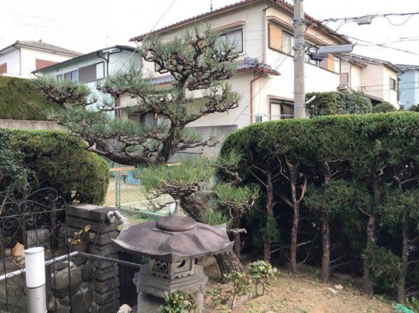 T様松の木アフター
