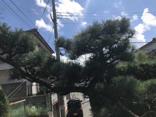 T様松の木ビフォア