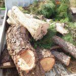 植木伐採もやってます!